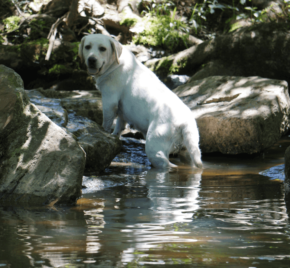 nala-playing-water