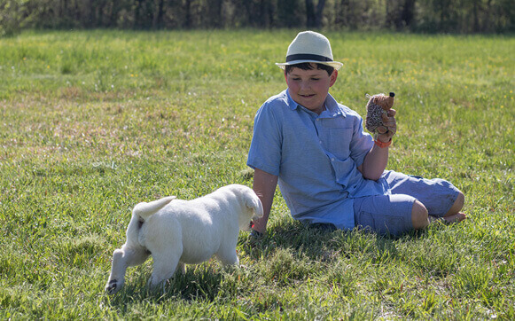 Boy Playing With White Labrador Puppy